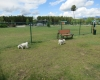 15 Dogs Pet Park_med