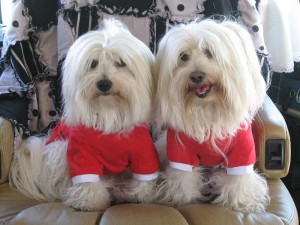 I can't resist dressing Margot and Rudi in red outfits on Christmas morning. I think they've worn these twice...