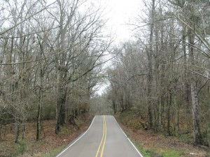 The road leading to our campground in Natchez State Park.