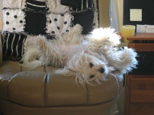 Margot takes her ease in the driver's cab chair. Yep, she's looking very shaggy.